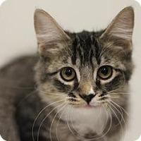 Adopt A Pet :: Ding-Dong - Sacramento, CA