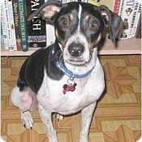 Adopt A Pet :: Willy - Topeka, KS