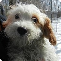 Adopt A Pet :: Calvin ADOPTED!! - Antioch, IL