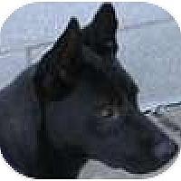 Adopt A Pet :: Bette - Hamilton, ON