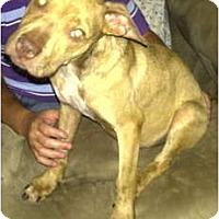 Adopt A Pet :: Angelo- COURTESY LISTING - Killen, AL