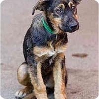 Adopt A Pet :: Denver - Portland, OR