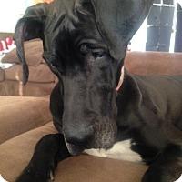 Adopt A Pet :: Sparkles - O'Fallon, MO