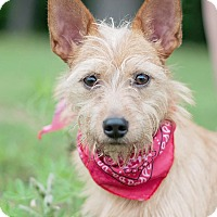 Adopt A Pet :: Misty - Kingwood, TX