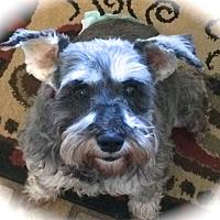 Adopt A Pet :: Gigi - Sharonville, OH