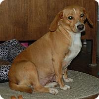 Adopt A Pet :: Daisy - Manning, SC