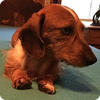 Adopt A Pet :: BUDDY BARKLEY - Waldron, AR