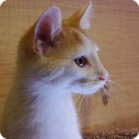 Adopt A Pet :: Ned - San Jose, CA