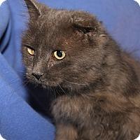 Adopt A Pet :: Ol' Man (Neutered) - Marietta, OH
