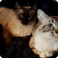 Adopt A Pet :: Marcus & Malachi - Ennis, TX