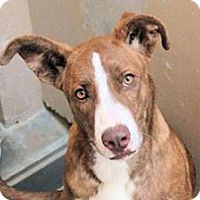 Adopt A Pet :: LOVETTE - Red Bluff, CA