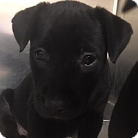 Adopt A Pet :: Mercedes - Fort Collins, CO