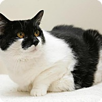 Adopt A Pet :: Luella - Bellingham, WA