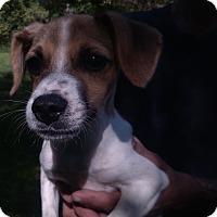 Adopt A Pet :: Sparkey - Kendall, NY