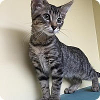 Adopt A Pet :: Loves - Maryville, MO