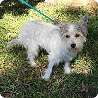 Adopt A Pet :: Fantasia - McKinney, TX
