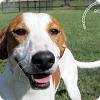 Adopt A Pet :: Jack - Sidney, OH