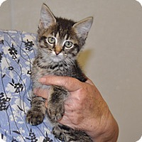 Adopt A Pet :: Mystery - Sunrise Beach, MO