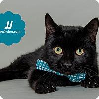 Adopt A Pet :: JJ - Wyandotte, MI