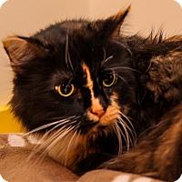 Adopt A Pet :: Maude - Brimfield, MA