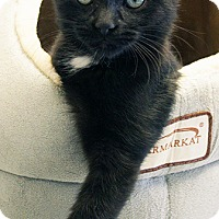 Adopt A Pet :: Father Steve - Maynardville, TN