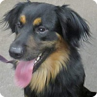Adopt A Pet :: Kanye - Lloydminster, AB