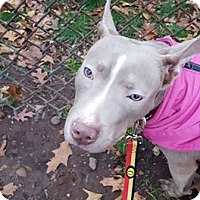 Adopt A Pet :: Holly - Bloomfield, NJ