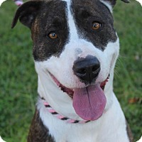 Adopt A Pet :: SOFIA Low Fee-altered - Red Bluff, CA