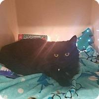 Adopt A Pet :: Mystique - Addison, IL