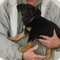 Adopt A Pet :: Gabby - Livingston, TX