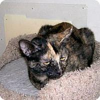 Adopt A Pet :: Callie Mama - Scottsdale, AZ