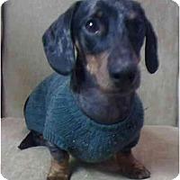 Adopt A Pet :: REMUS LONGFELLOW - Portland, OR
