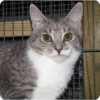 Adopt A Pet :: Bria - Monroe, GA