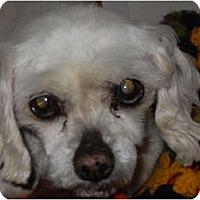 Adopt A Pet :: Wanda - Newport, VT