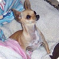 Adopt A Pet :: Lola - Tucson, AZ