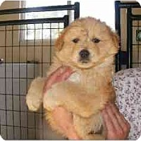 Adopt A Pet :: Dabo - Alexandria, VA