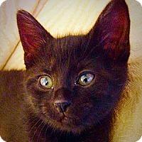 Adopt A Pet :: Ludwig - Green Bay, WI