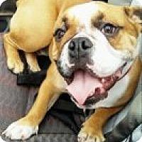 Adopt A Pet :: Daisy - Fort Lauderdale, FL