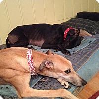 Adopt A Pet :: Jessie - Lexington, SC