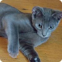 Adopt A Pet :: Loki - Vansant, VA