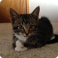 Adopt A Pet :: Maverick - Ogallala, NE