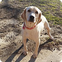 Adopt A Pet :: Sandy - Berkeley Heights, NJ