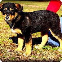Adopt A Pet :: Aba~adopted! - Glastonbury, CT