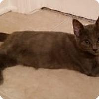 Adopt A Pet :: Grace - McHenry, IL