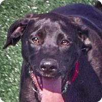 Adopt A Pet :: Noah - Lincolnton, NC