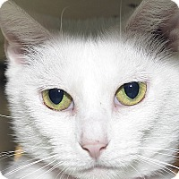Adopt A Pet :: Hope - Medina, OH