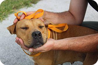 Terrier (Unknown Type, Medium) Mix Dog for adoption in Homestead, Florida - Anita
