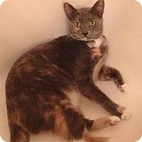 Adopt A Pet :: Amelia - Gainesville, FL