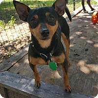 Adopt A Pet :: Biscuit - Weatherford, TX