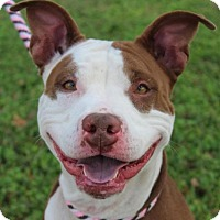 Adopt A Pet :: LUCY-Spayed, Free by gift - Red Bluff, CA